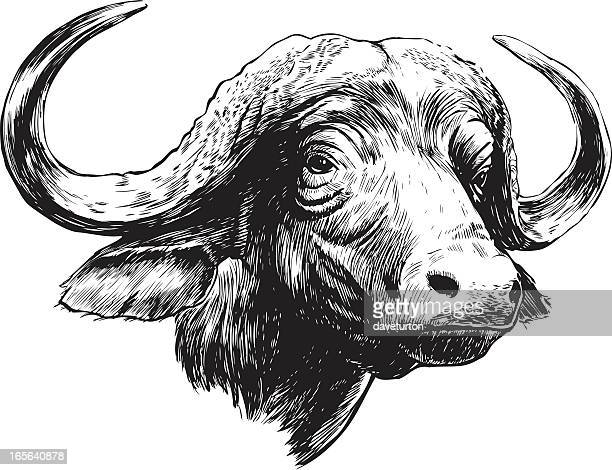 cape buffalo b&w - african buffalo stock illustrations, clip art, cartoons, & icons