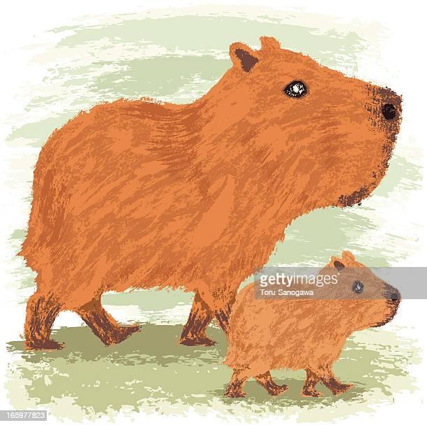 capybara - capybara stock illustrations