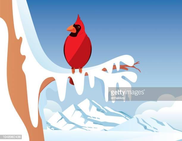 Cardinal bird and Winter