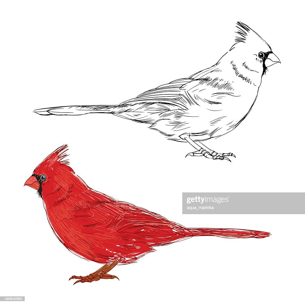 Cardinal bird.  Vector set, isolated elements for design.