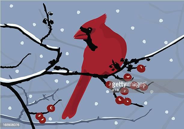 cardinal in the snow - cardinal bird stock illustrations, clip art, cartoons, & icons