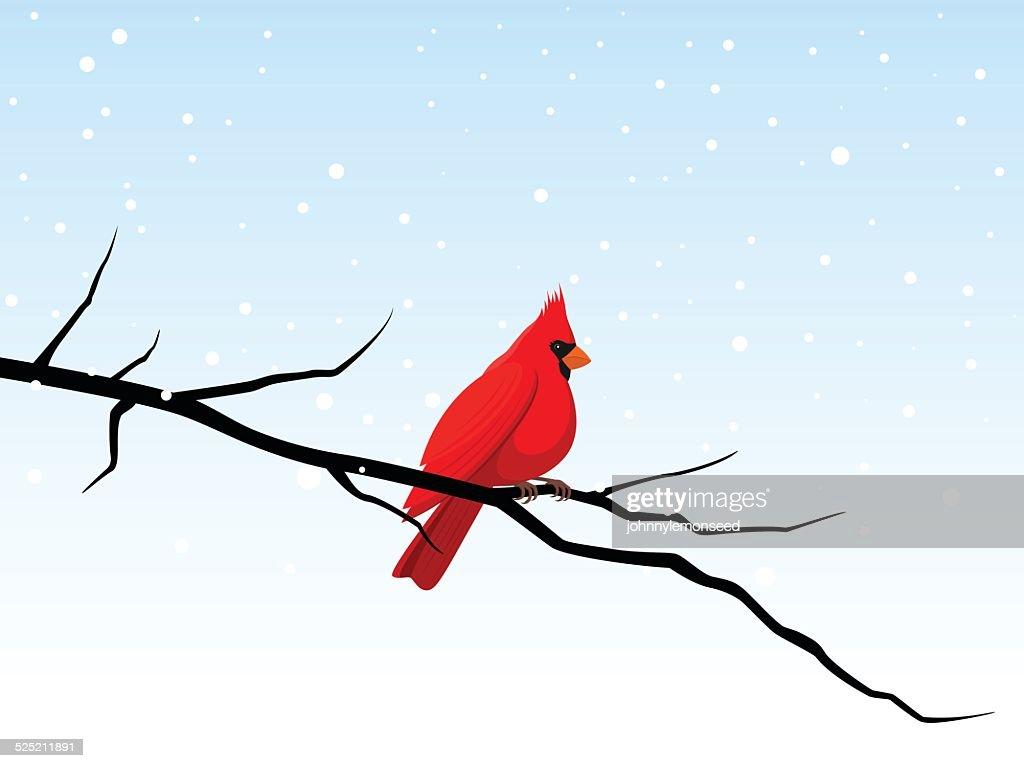 Cardinal on a Branch