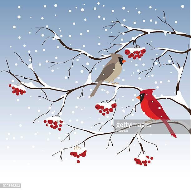 cardinal - cardinal bird stock illustrations, clip art, cartoons, & icons