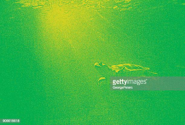 caribbean sea turtle swimming underwater and sunbeams - green turtle stock illustrations, clip art, cartoons, & icons