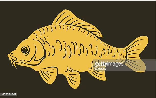 illustrations, cliparts, dessins animés et icônes de poisson carpe - carpe