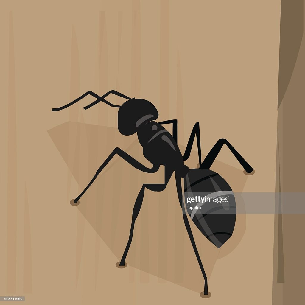 carpenter ant on a trunk