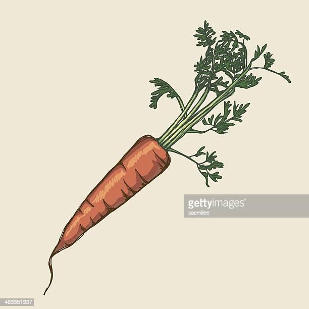 ilustrações de stock, clip art, desenhos animados e ícones de cenoura - cenoura