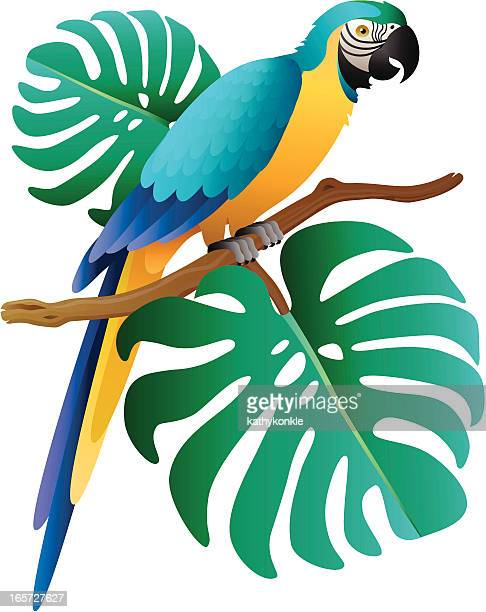 cartoon blue and gold macaw on an aroid branch - gold and blue macaw stock illustrations