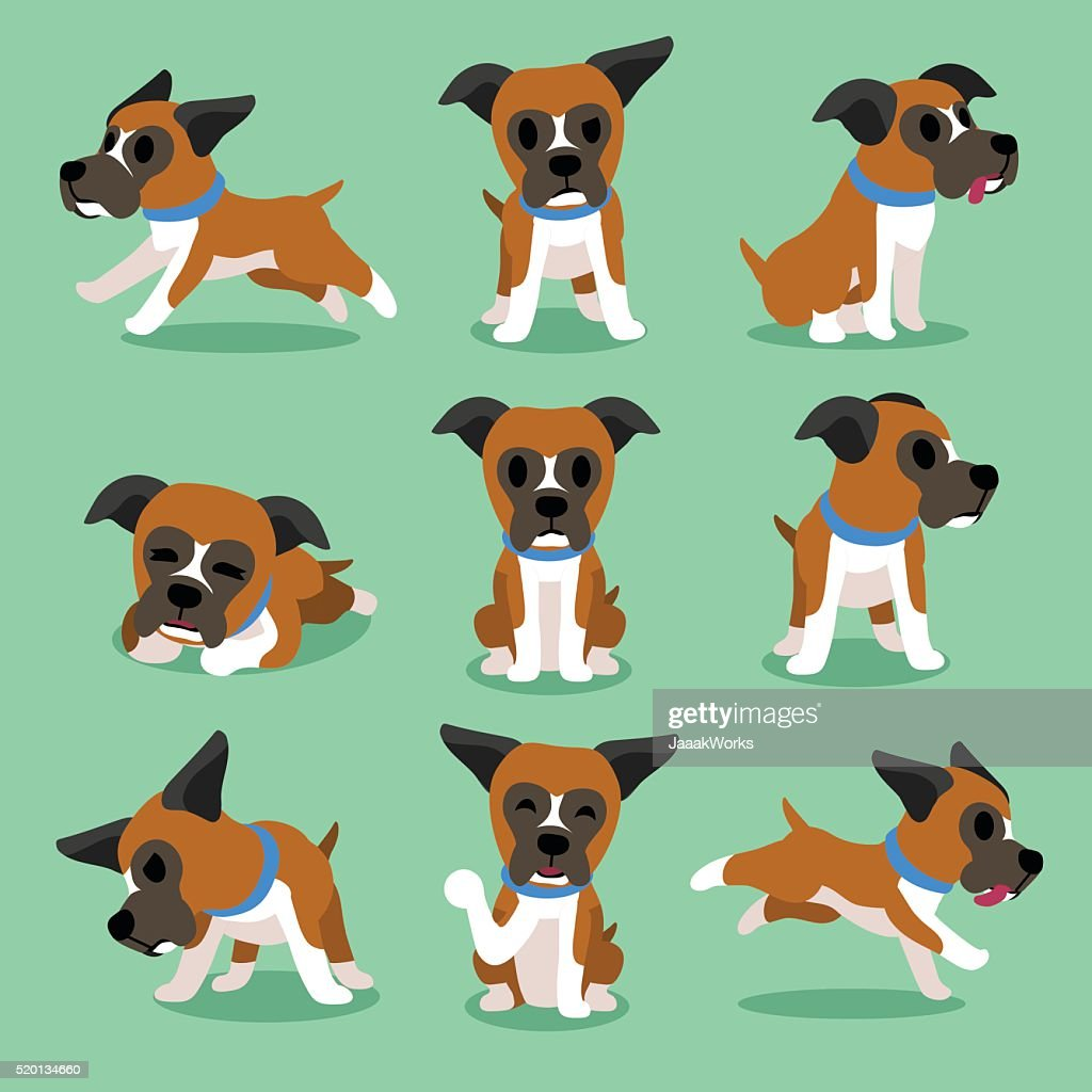 Cartoon character boxer dog poses