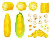 Cartoon corn. Golden maize harvest, popcorn corny grains and sweet corn. Ear of corn, delicious vegetables vector illustration set