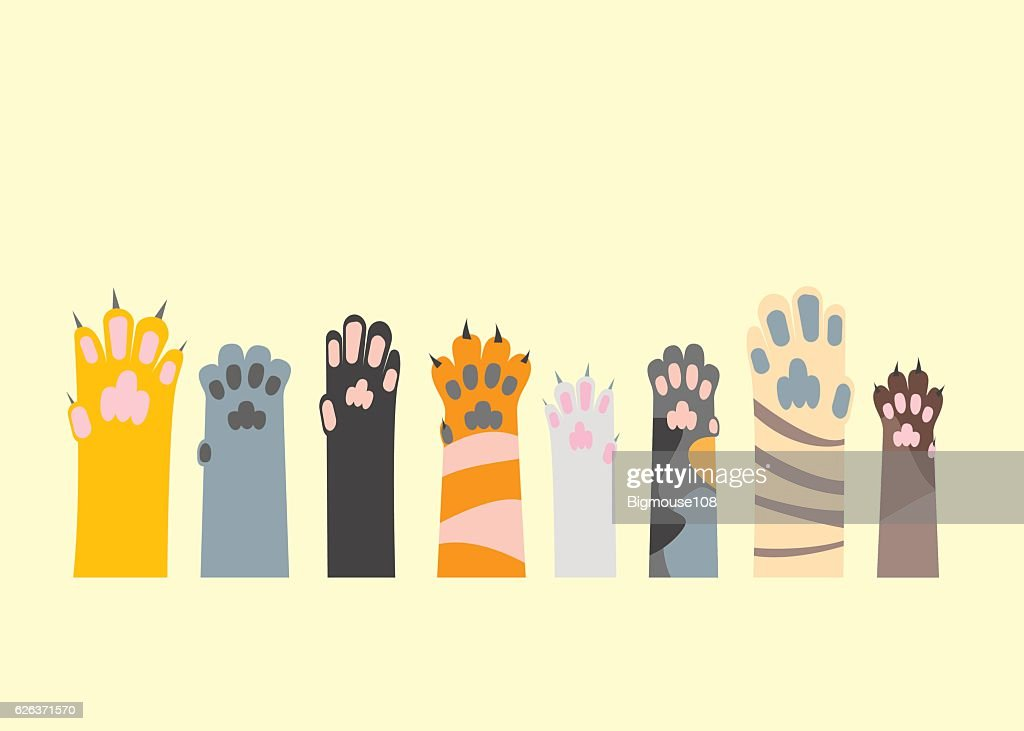 Cartoon Different Cat Paw Set. Vector