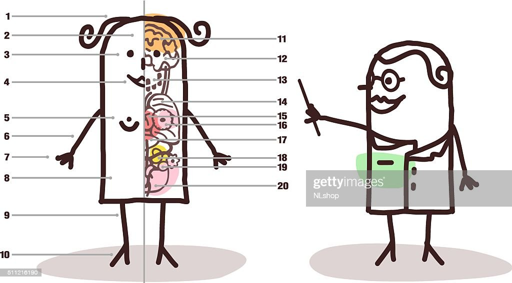 Cartoon Female Anatomy Lesson Vector Art | Getty Images