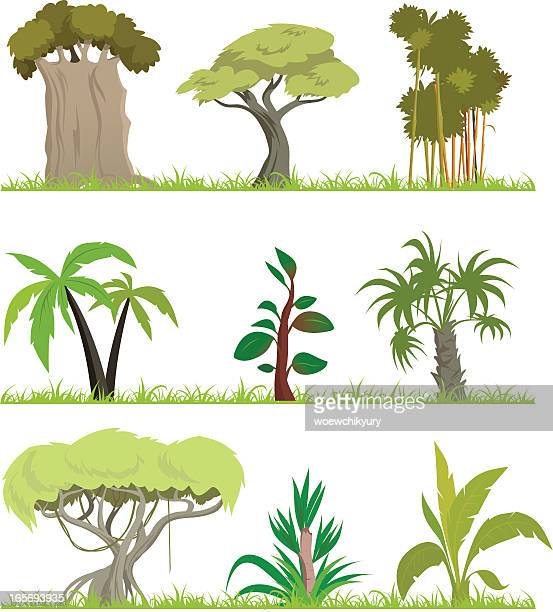 illustrations, cliparts, dessins animés et icônes de dessin animé jungle forêt - baobab