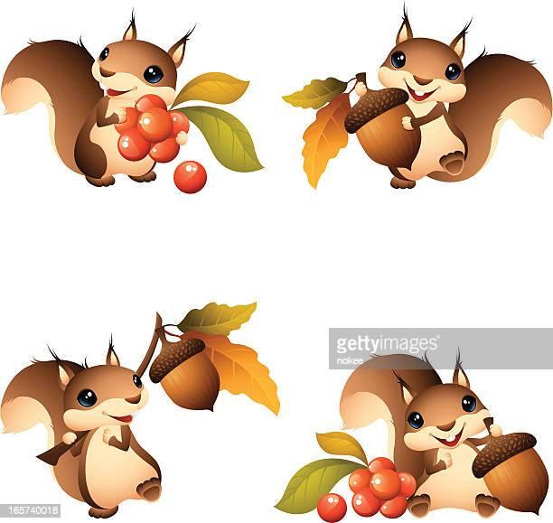 illustrations, cliparts, dessins animés et icônes de dessin animé d'écureuil graphismes avec gland et des fruits rouges - écureuil