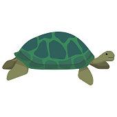 Cartoon Green Sea Turtle Smiling