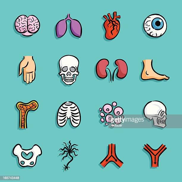 ilustrações, clipart, desenhos animados e ícones de ícones-anatomia dos - perna humana