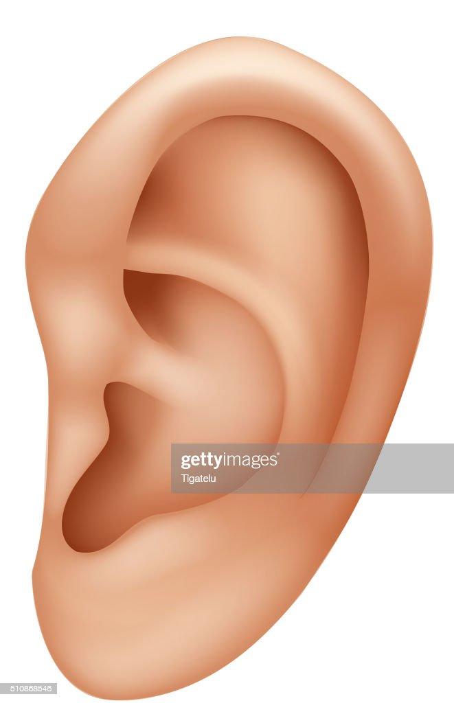 Cartoon illustration of ear human isolated on white background