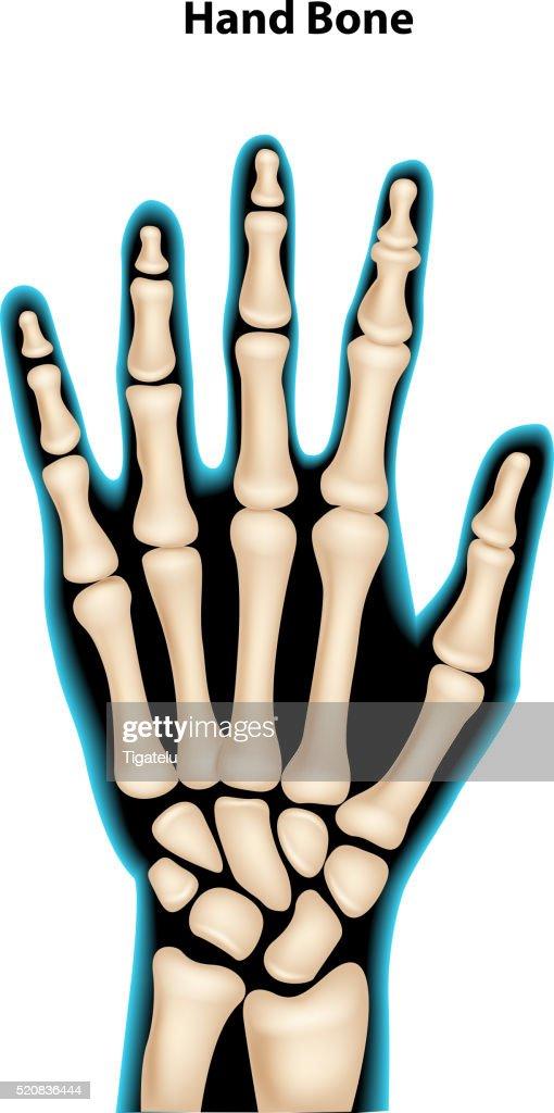 Cartoon illustration of hand bone