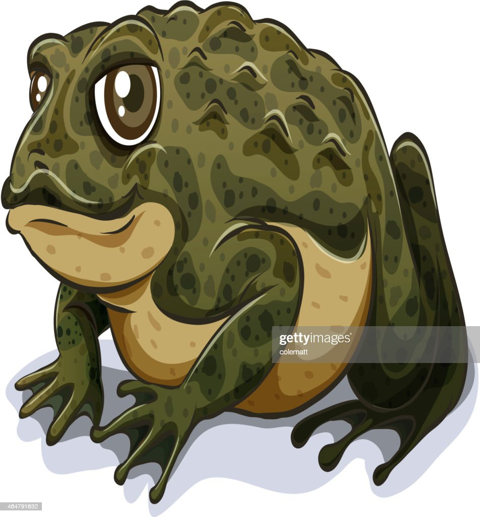 Cartoon image of a toad on a white background