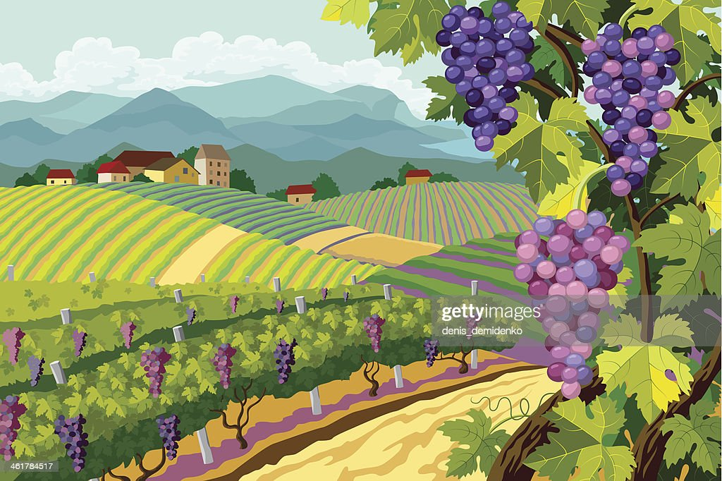 Cartoon image of a vineyard with purple grapes