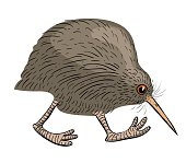 Cartoon image of kiwi bird