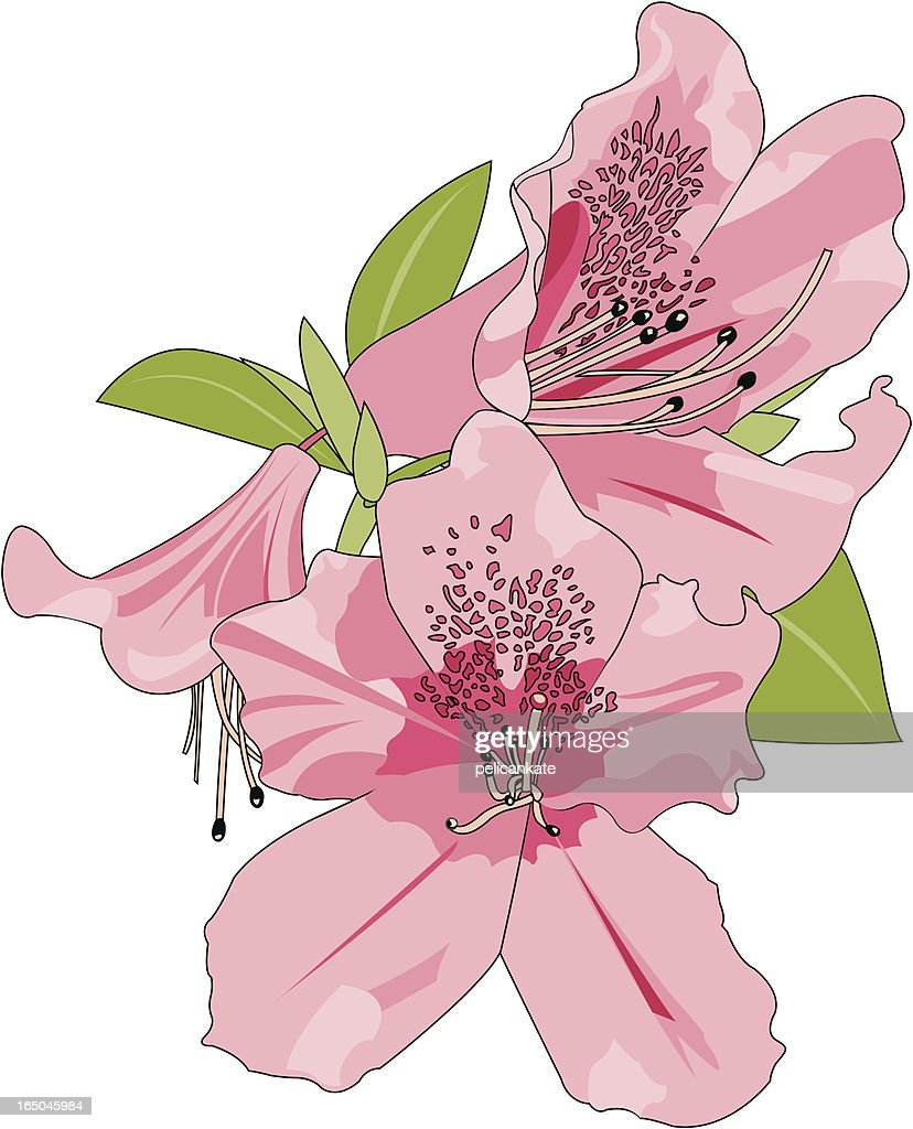 A cartoon image of pink azaleas on a white background
