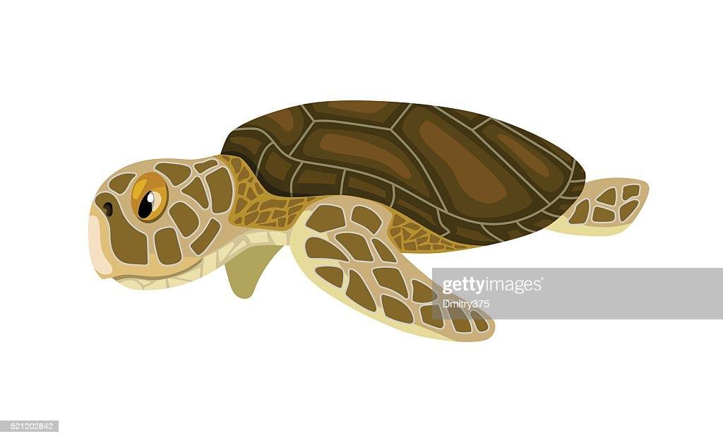 cartoon isolated sea turtle