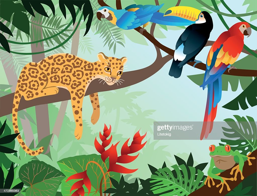 A cartoon jungle design with leopard, parrot, and Toucan : stock illustration