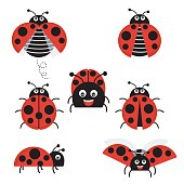 Cartoon ladybug vector set isolated from the background. Cute ladybug on a leaf or flying in a flat style