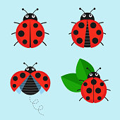 Cartoon ladybug vector set