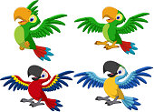 Cartoon macaw collection set