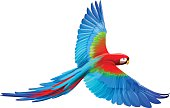A cartoon Macaw with its wings spread out