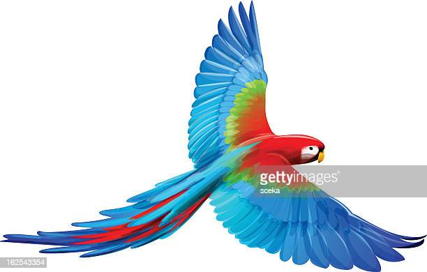 a cartoon macaw with its wings spread out - flying stock illustrations