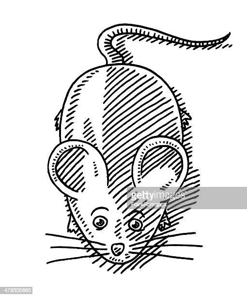 cartoon mouse animal drawing - cute mouse stock illustrations