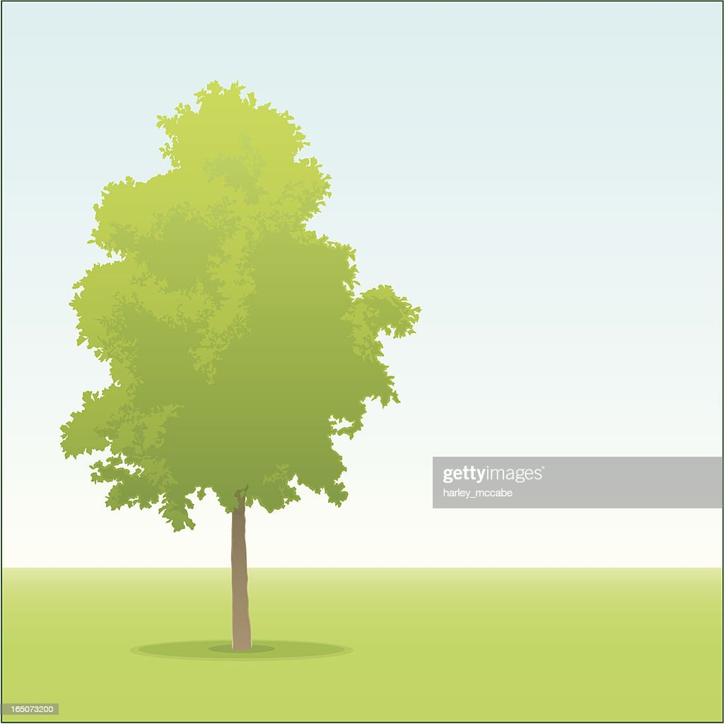 A cartoon of a young oak tree in a park