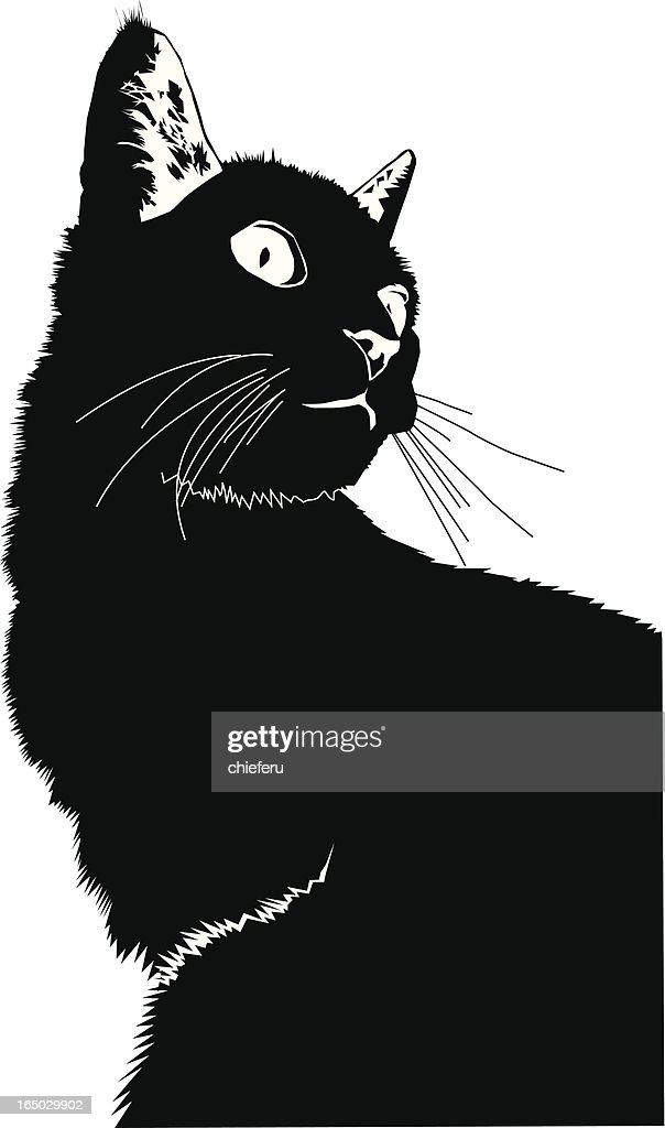Cartoon Of Black Cat Against White Background High Res Vector Graphic Getty Images Cat cartoon cute animal kitten pet feline kitty funny black cat. https www gettyimages com detail illustration cartoon of black cat against white royalty free illustration 165029902