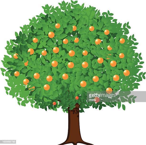 Orange Fruit Vector 60 Top Orange Tree Sto...