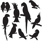 Cartoon parrots set vector