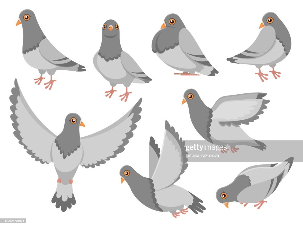 Cartoon pigeon. City dove bird, flying pigeons and town birds doves isolated vector illustration set