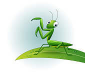 Cartoon praying mantis on leaf