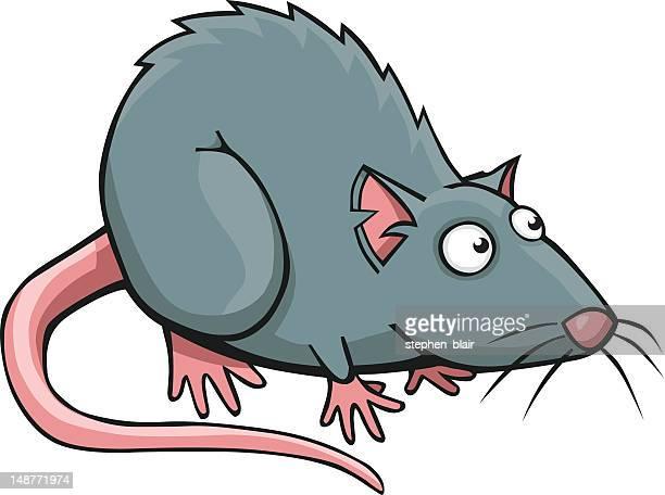 1 338 rat high res vector graphics getty images https www gettyimages com vectors rat