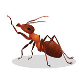 Cartoon realistic ant isolated on white. One leg raised up