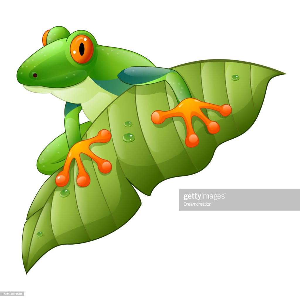 Cartoon red-Eyed Amazon Tree Frog on green leaf
