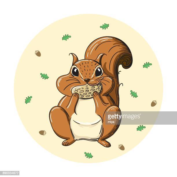 cartoon squirrel holding acorn - illustration - squirrel stock illustrations