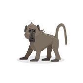 Cartoon trendy design walking baboon monkey. African wildlife animal isolated on white background. Vector ape  illustration.