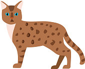 Cartoon vector cat character