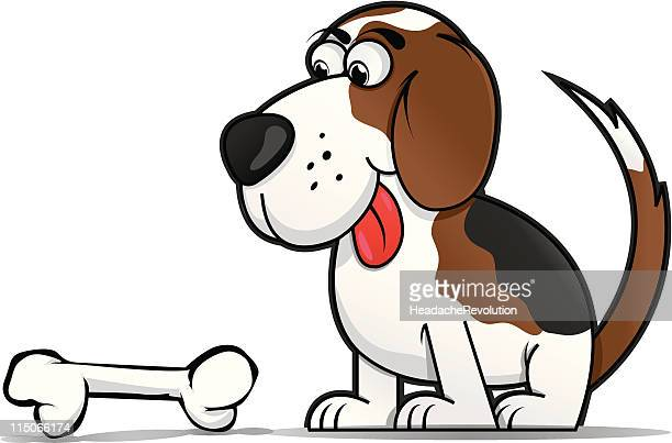 cartoonish beagle staring a bone - dog bone stock illustrations