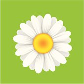 Cartoonish yellow and white daisy with green background