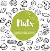 Cashew, hazelnut, walnut, pistachio, pecan nuts. Nuts sketches .