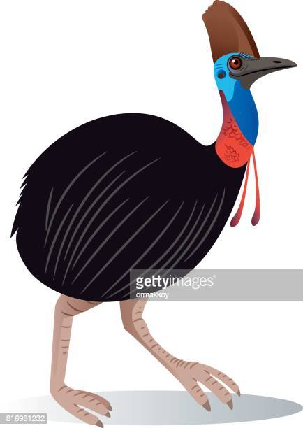 cassowary - ostrich stock illustrations, clip art, cartoons, & icons
